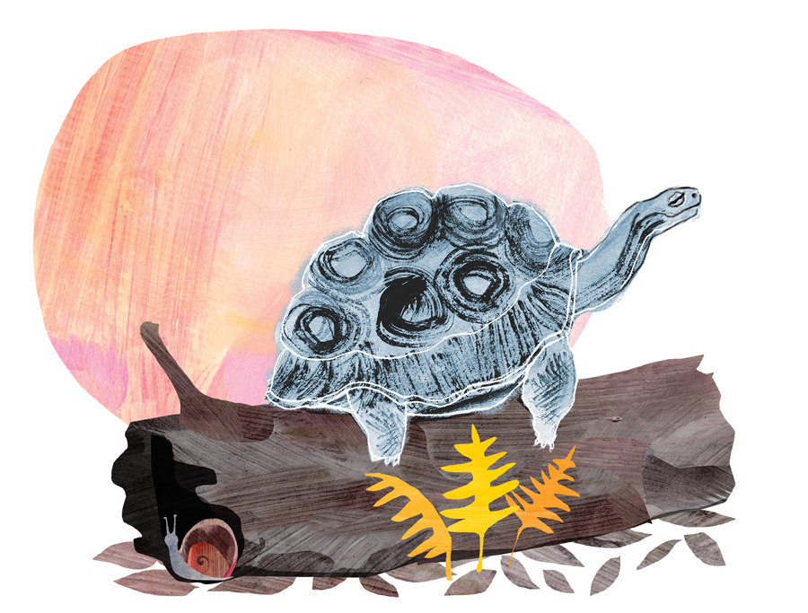 The Wise Turtle illustration for Spirituality and Health magazine