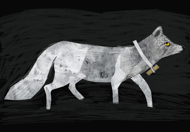 Arctic Fox Illustration